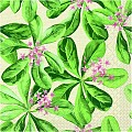 Napkins JANE 40x40cm 1/4fold TISSUE 3-ply green - 600pcs.