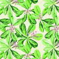 Table Cloths JANE 80x80cm LINCLASS-Airlaid green - 60pcs.